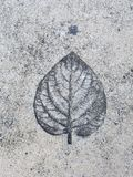 Imprint leaf on cement Stock Photo