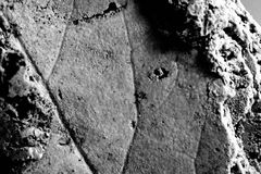 Imprint of leaf fossil. In the stone stock photo
