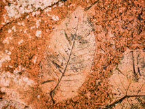 The Imprint of leaf texture on cement floor Stock Photography