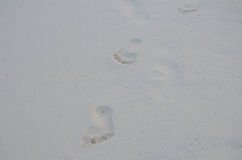 Imprinted Footprints in the White Sand in Aruba Stock Image