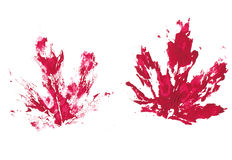 Imprints. Artistic isolated imprints of maple leaves Royalty Free Stock Photography