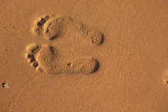 Imprints of footsteps Stock Photos