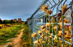 Imprisoned Flowers Royalty Free Stock Image