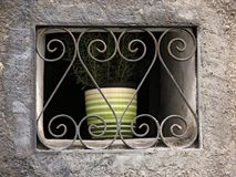 Imprisoned plant. Pot plant behind bars Stock Photos