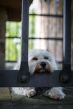 Imprisoned and sad Royalty Free Stock Photo