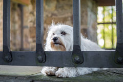 Imprisoned Stock Photography