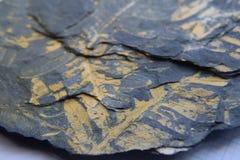Impronta fossile della felce di albero Immagine Stock