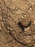 Impronte dei bastoni in fango e sporcizia fotografia stock libera da diritti
