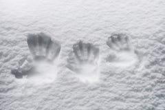 Impronte digitali nella neve Fotografia Stock