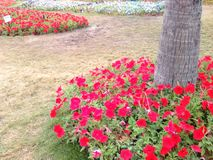Improve field. Flowers create colorful refreshing relaxing space beautiful for rest Royalty Free Stock Photography