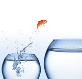 Improvement concept. Goldfish jumping out of the water - improvement concept Stock Photo