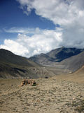 Improvised Wind Shelter in Dry Himalayas Royalty Free Stock Images