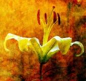 Improvisieren Sie Abbildung der Lilie Stockbilder