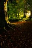 Improvvisamente, la luce è venuto, sommerso il sottobosco, incitato noi a ritenere ancora viva Fotografie Stock