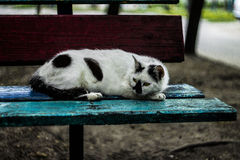 Impudent cat. That occupied a bench, he lay down to rest, fearless cat Stock Image