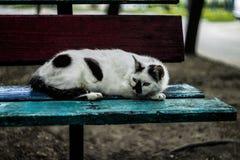Impudent cat Stock Image