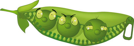 Impudent green peas Royalty Free Stock Image