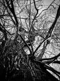 Impulsado por debajo de ramas del tronco de árbol Imagen de archivo