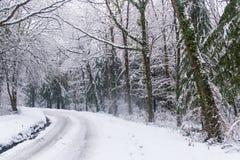 Impulsión Nevado a través de árboles Fotografía de archivo