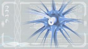 Impulsi del cervello Sistema del neurone Anatomia umana Lavoro di cervello impulsi di trasferimento e generare informazioni Fondo illustrazione di stock
