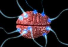 Impulsos en cerebro Fotografía de archivo libre de regalías