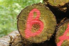 Início de uma sessão marcado uma madeira foto de stock royalty free