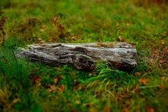 Início de uma sessão velho a grama verde Fotografia de Stock
