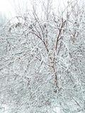 Início inesperado do inverno no primeiro dia de dezembro fotografia de stock royalty free