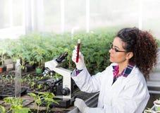Inżynier pracuje na rośliny ochronie Fotografia Stock