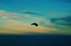 Free In Flight Stock Photo - 1104340