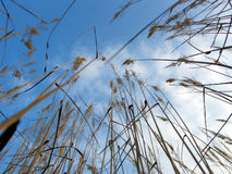 In Grass Stock Photo