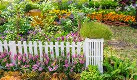 Free In Home Garden. Stock Photo - 104221220