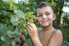 Free In Summer, In The Garden, The Boy Stands Near A Bush Of Ripe Raspberries. Royalty Free Stock Photos - 104890558