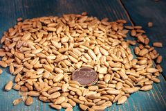 In Sunflower Seeds Peeled From The Shell Are Money Metal Coin Royalty Free Stock Images