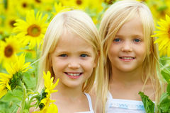Free In Sunflowers Royalty Free Stock Photos - 15675588