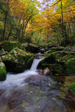In The Fall Of The Stream Royalty Free Stock Photo