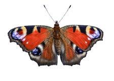 Inachis io della farfalla di pavone isolato su un fondo bianco Fotografie Stock Libere da Diritti