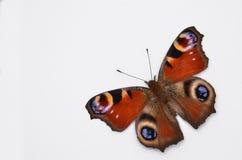 Inachis Io, mariposa de pavo real Imágenes de archivo libres de regalías