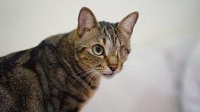 Inaktivera katten med en ögontjänstledighet arkivfoto