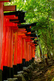 Inari daisha Royaltyfri Foto