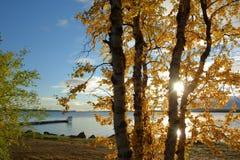 Inari lake, lapland Royalty Free Stock Photo