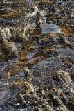 Inaridire dello scorrimento dell'acqua Fotografie Stock