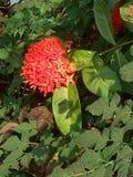 Inativamente flor Imagem de Stock