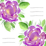 Inbjudankort med blommande pioner för vattenfärg Bruk för anteckningsbokräkningen, broschyren, reklambladet, inbjudningar, bröllo Royaltyfri Foto