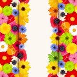 Inbjudankort med färgrika blommor Vektor EPS-10 Arkivbilder