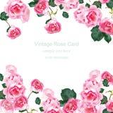 Inbjudankort med vektorn för bukett för vattenfärgtappningrosor Blom- rosa dekor för hälsningar, bröllop, födelsedag och Royaltyfri Bild