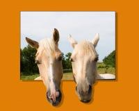 inbunde hästar ut arkivfoton