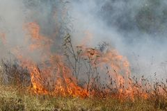 Incêndio de Bush Foto de Stock Royalty Free
