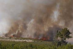 Incêndio e floresta Fotos de Stock Royalty Free