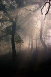 Incêndio e névoa imagem de stock